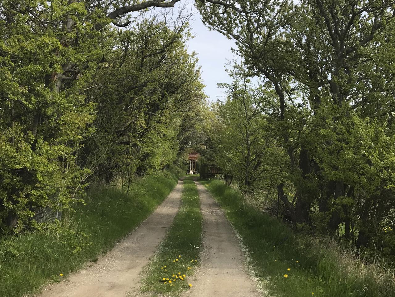 デンマークの風景。北欧の風景。ヴィンテージ家具の買い付け。